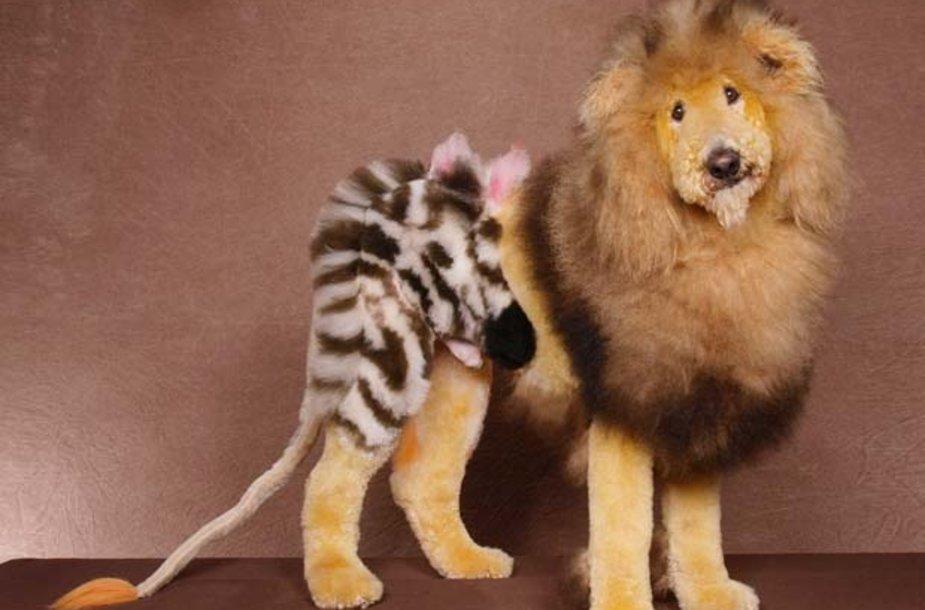 """Šukuosena – """"liūtas"""""""