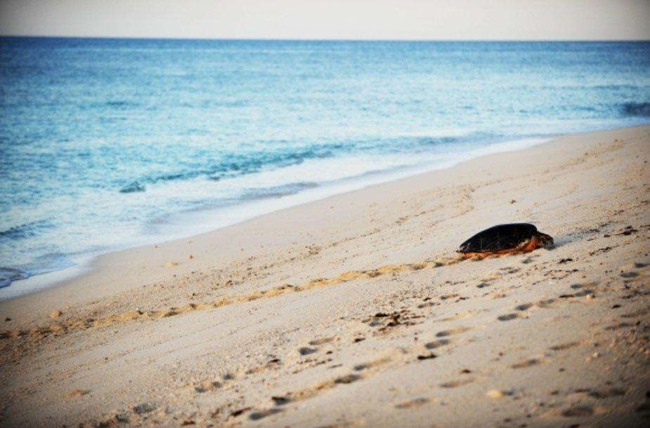 Paplūdimys.
