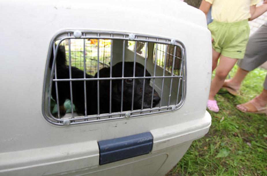 Gyvūno gelbėjimo operacija