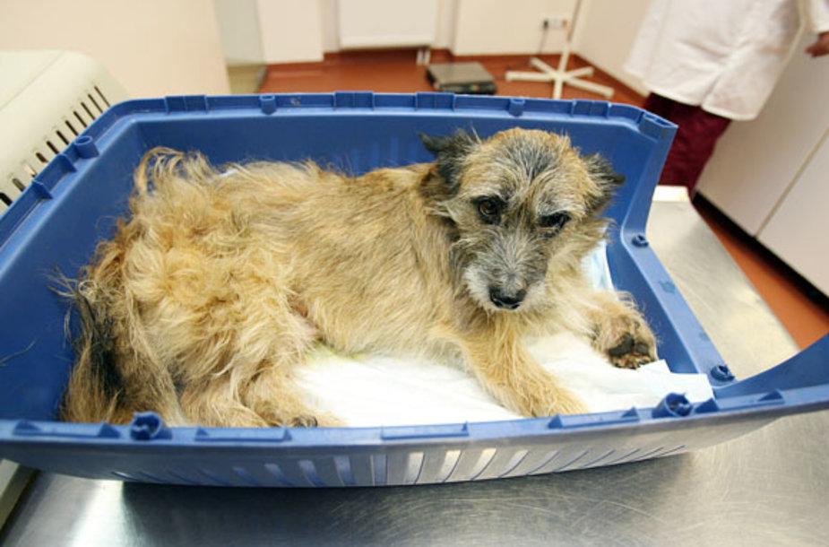 Šuo medikų globoje