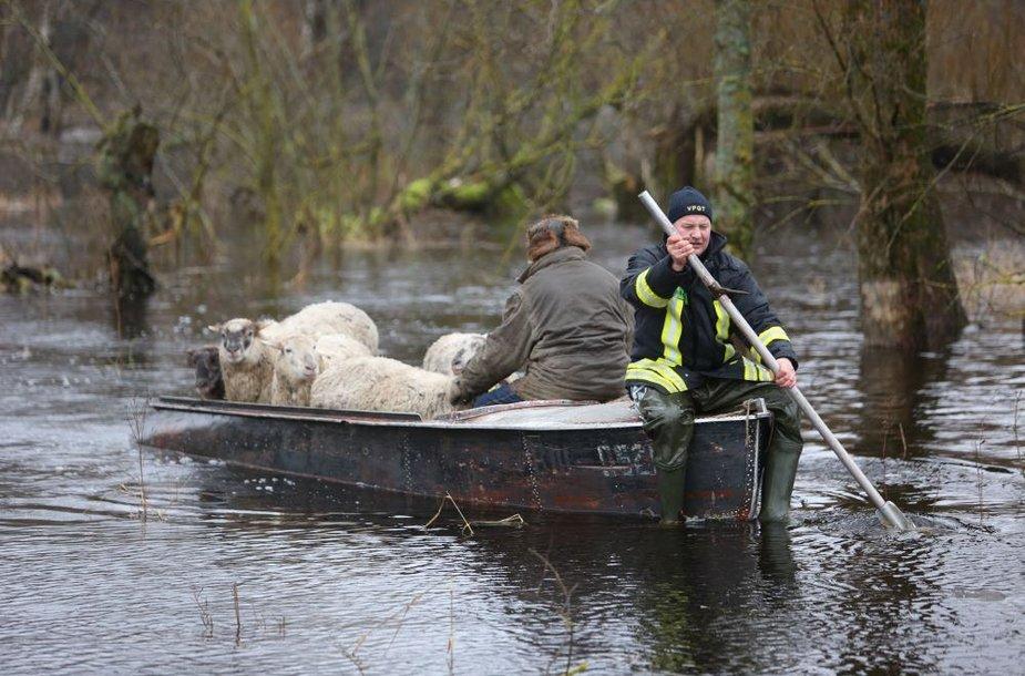 Ugniagesiai išgelbėjo avių bandą, atsidūrusią potvynio užlietoje ganykloje.