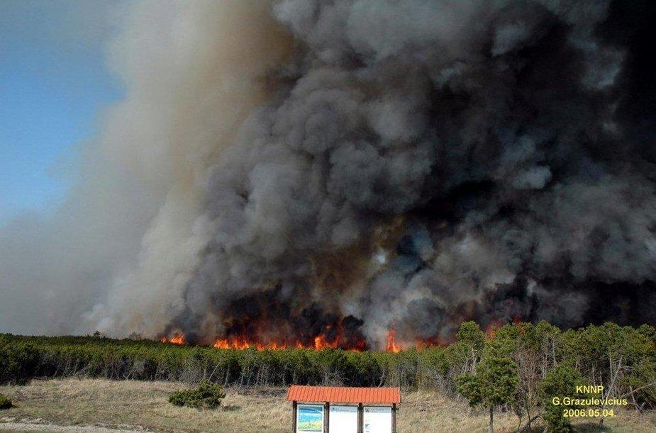 2006-aisiais siautęs Smiltynės gaisras pramintas amžiaus gaisru. Išdegė 235 ha miško ploto.