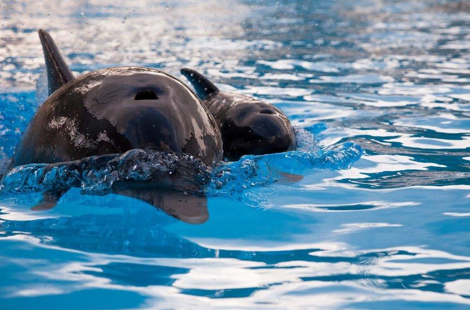 Delfinariumas kovą kviečia senjorus apsilankyti už simbolinę kainą.