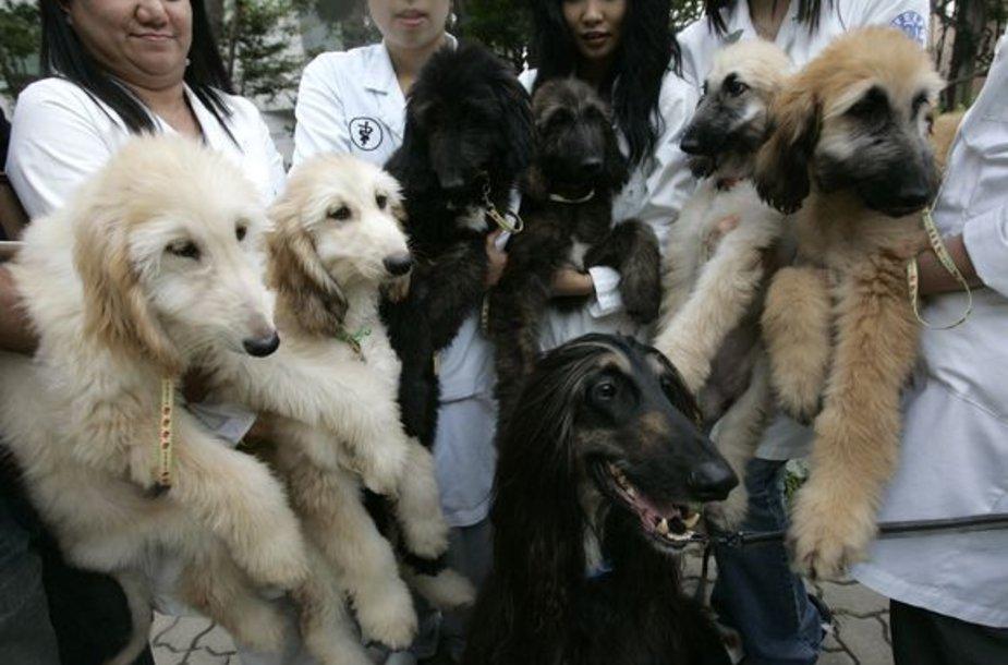 Klonuoto šuns palikuonys