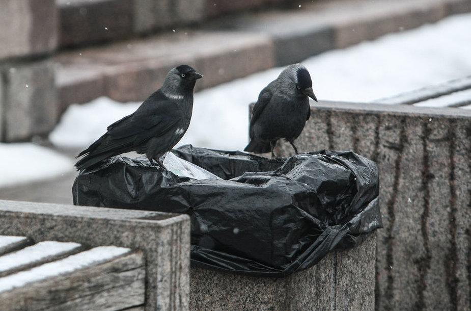 Prieš pat Velykas Vilniuje – gausus sniegas
