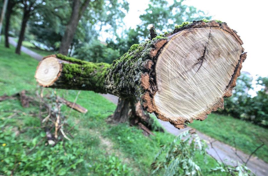 Per audrą išvartyti medžiai tebetvarkomi