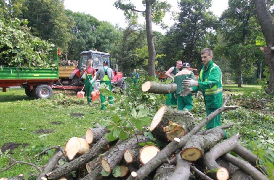 Sereikiškių parke tvarkomi išvartyti medžiai.
