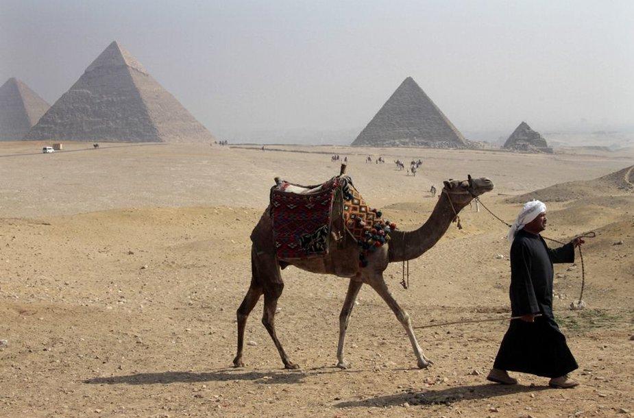 Egiptietis su kupruanugariu netoli Gizos piramidžių
