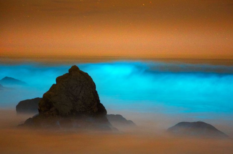 Kalifornijos paplūdimys žydint dumbliams