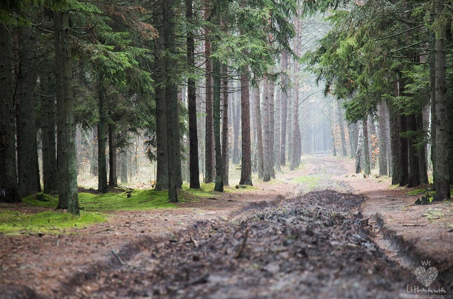Karklės miškas