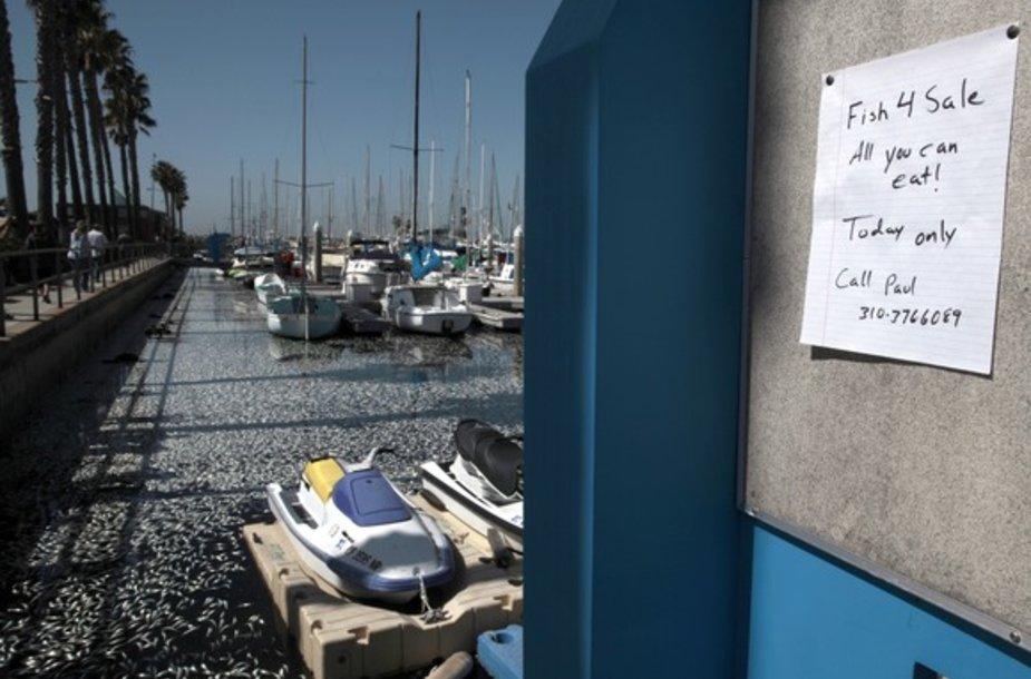 """Ant skelbimų lentos lapelis su užrašu """"Parduodama žuvis, kurią galima valgyti. Tik šiandien!"""""""