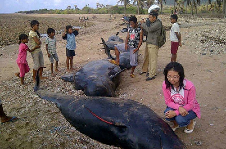 Delfinai Indonezijoje užplaukė ant seklumos