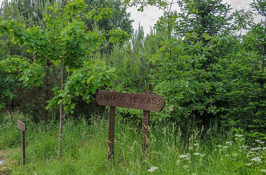 Europos miškas Akmenių kaime, Lietuvos-Lenkijos pasienyje Lazdijų rajone, pasodintas Lietuvos įstojimo į ES proga