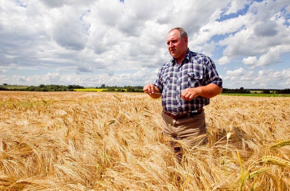 Ūkininkas S.Stirna bijo džiaugtis derliumi, nes nežinia ką dangus dar iškrės.