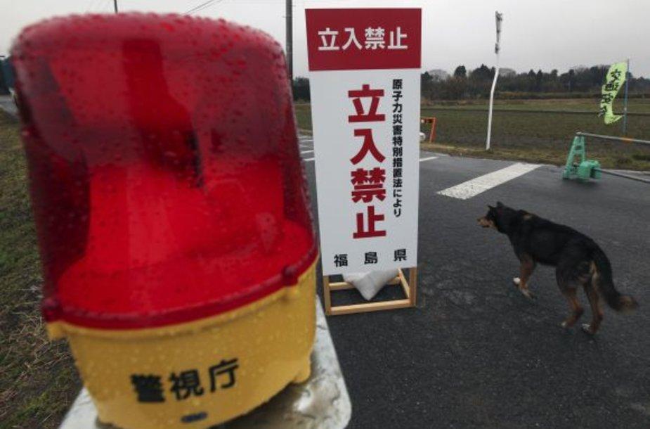 Evakuacijos metu šeimininkų paliktas šuo vaikšto prie policijos kontrolės punkto.