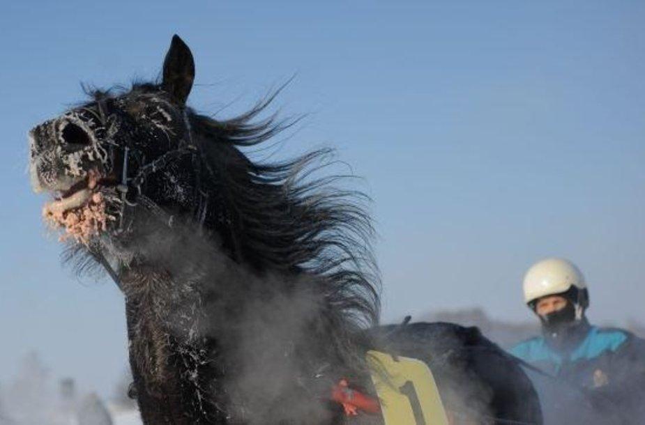 Žirgų lenktynių Sartuose akimirka