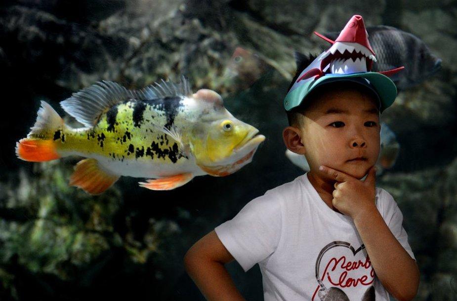 Ciklidai – populiarios gėlavandenės žuvys, dažnai auginamos kaip naminiai gyvūnai.