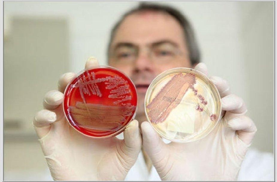 Bakterijų kolonijos