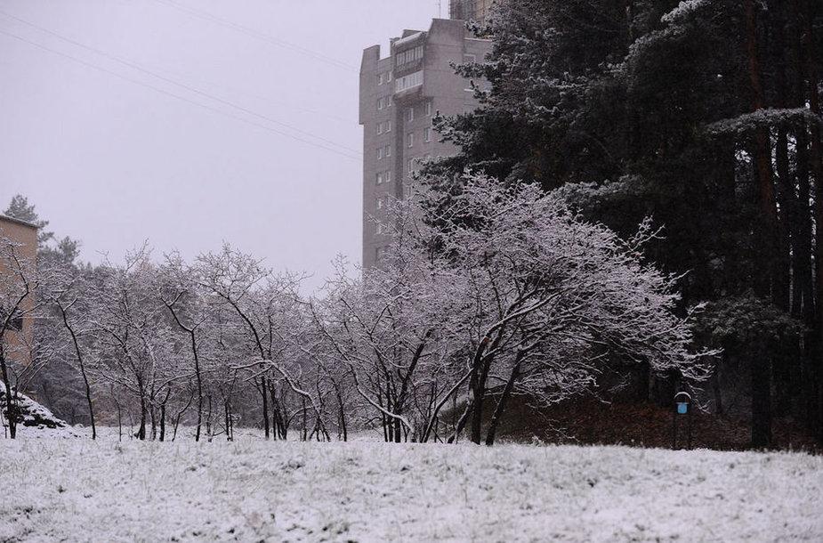 Pirmas sniegas Vilniuje