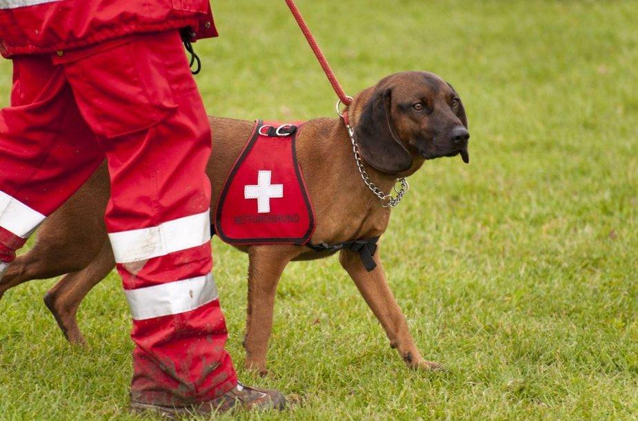 Šuo gelbėtojas