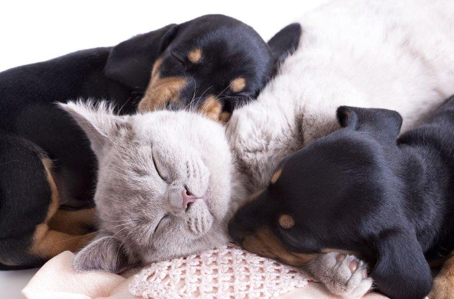 Miegantys augintiniai
