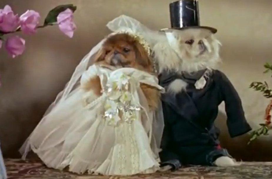 Šunų vestuvės