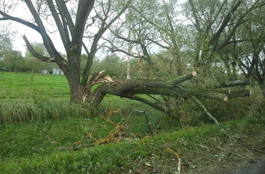 Lietuvoje siautė stiprus vėjas