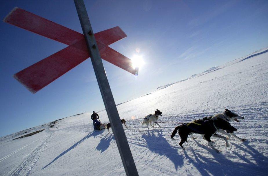 Pasivažinėjimas šunų kinkiniu