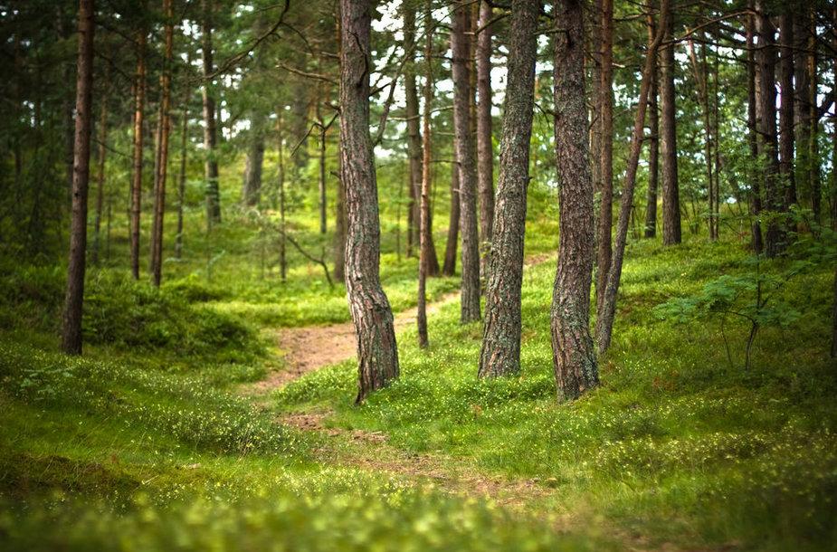 Natūralaus mineralinio vandens ištakos slypi miškuose