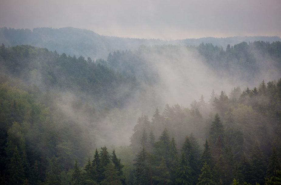 Vaizdas nuo Vilkakalnio apžvalgos bokšto