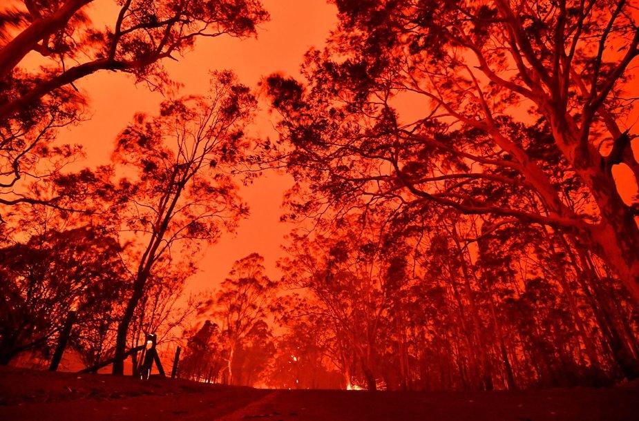 Australijoje šėlstantys gaisrai paplūdimiuose įkalino tūkstančius žmonių