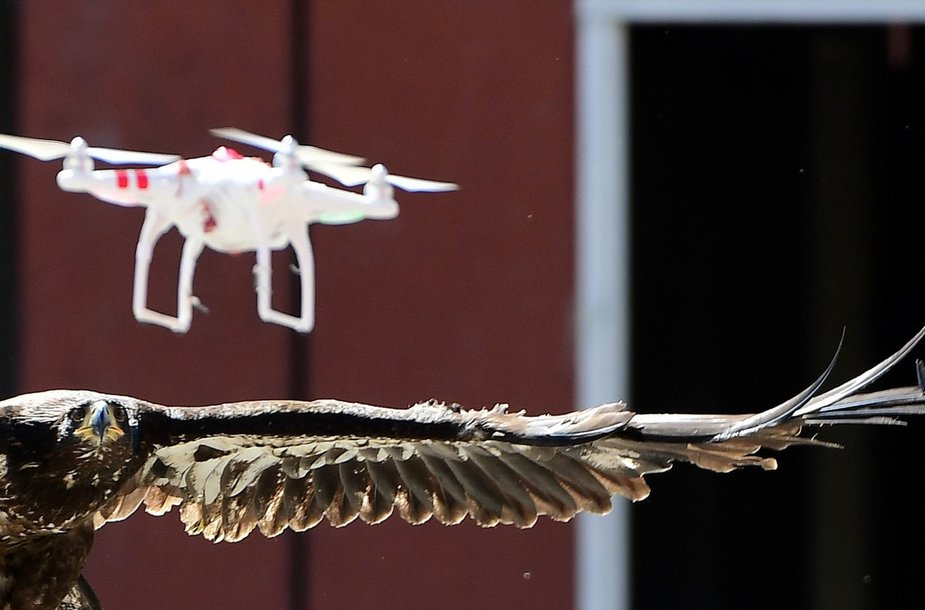 Nyderlanduose policija dresuoja erelius gaudyti bepilotes skraidykles