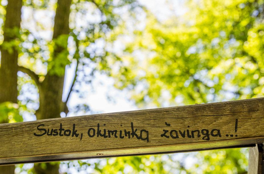 Saulėta diena jaukiame Verkių parke