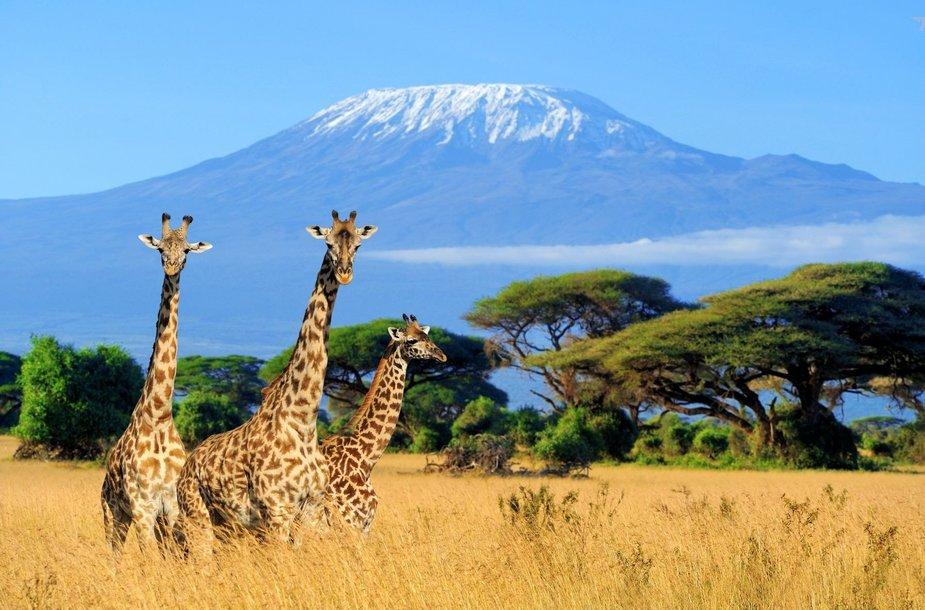 Amboselio nacionalinis parkas, Kenija