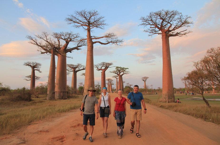 Baobabų alėja