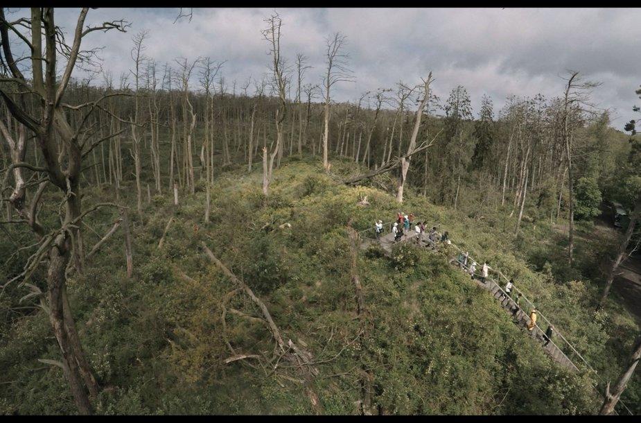 """Kadras iš filmo """"Rūgštus miškas"""""""