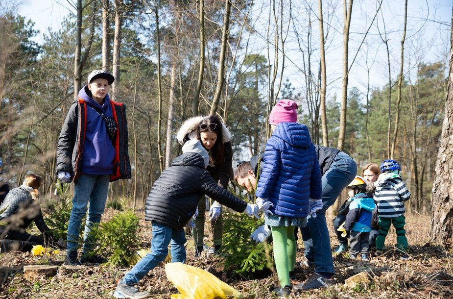 Planting of the treas