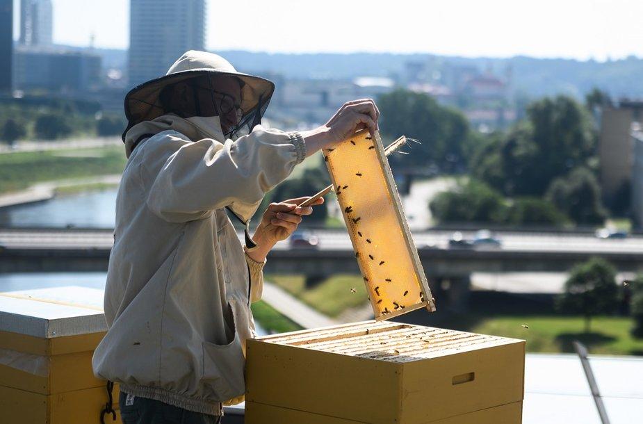 Vilnius honey SBA