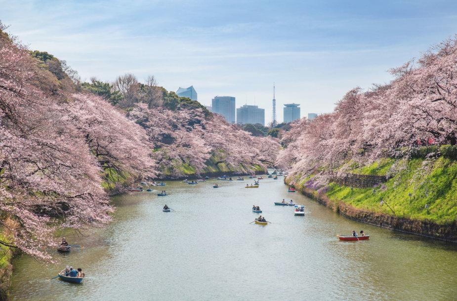 Tokijas, Japonija