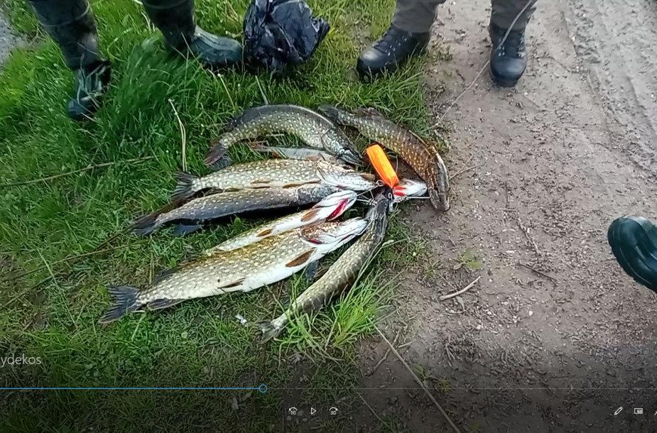 Neteisėtai sužvejotos lydekos Ilgės ežere