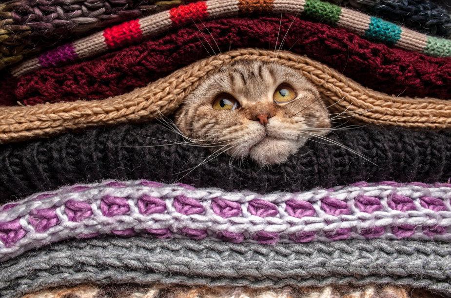 Katinas tarp megztinių.