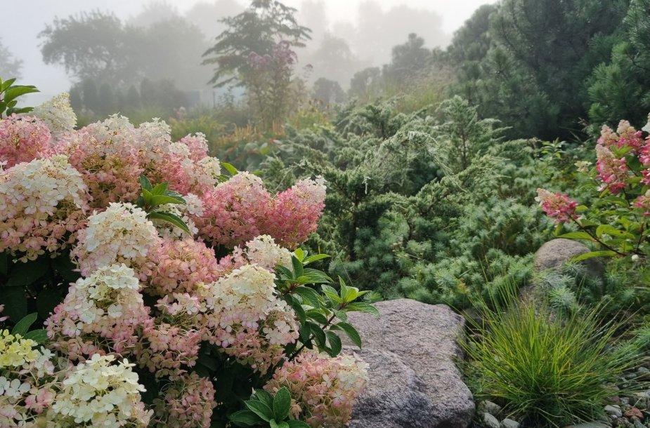 Astos kieme akis džiugina įvairūs augalai