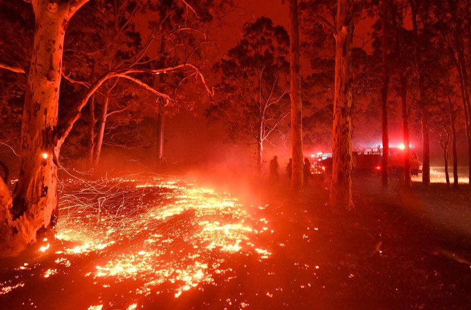 Miško gaisras Australijoje