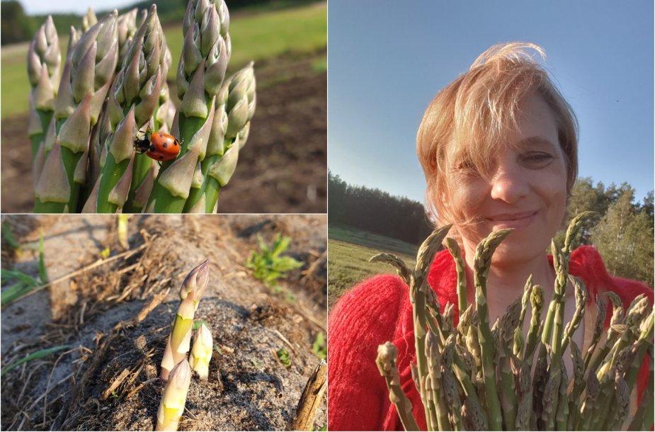 Enrika Karvelienė ir jos auginti smidrai