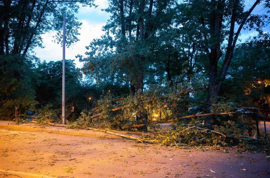 Naugarduko gatvėje nuvirto medis