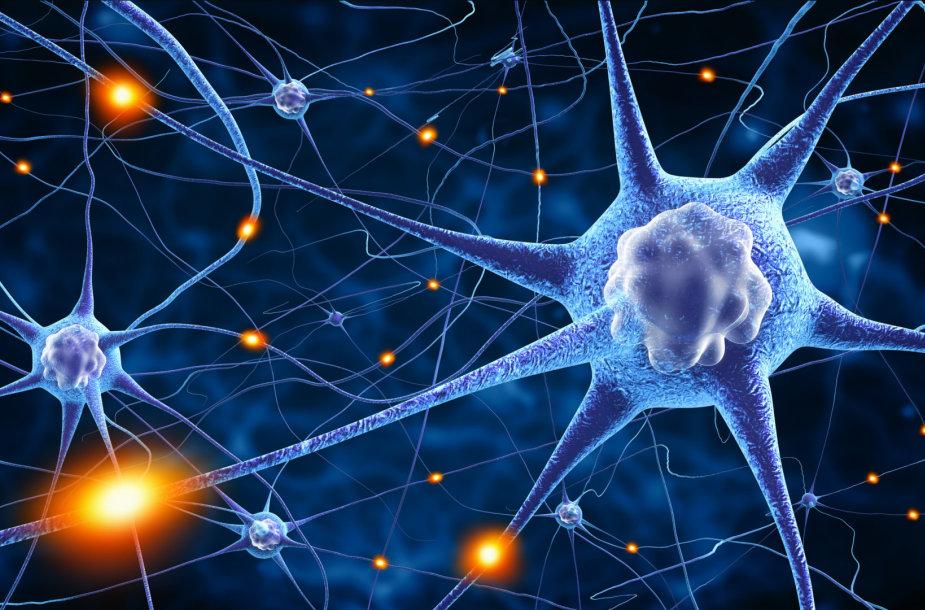 Nervų ląstelės