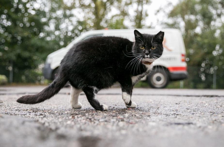 Benamė katė