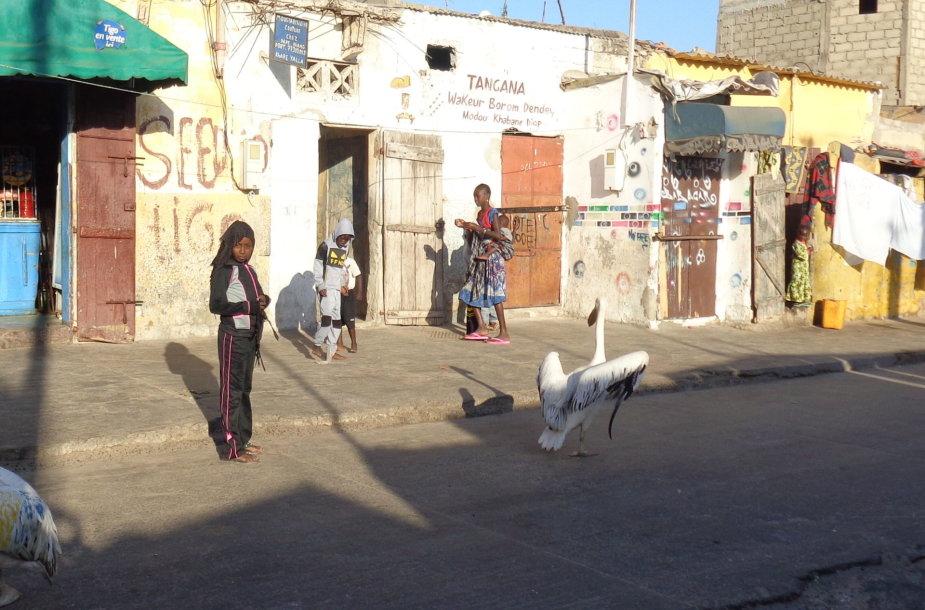 Sent Luisas Senegale