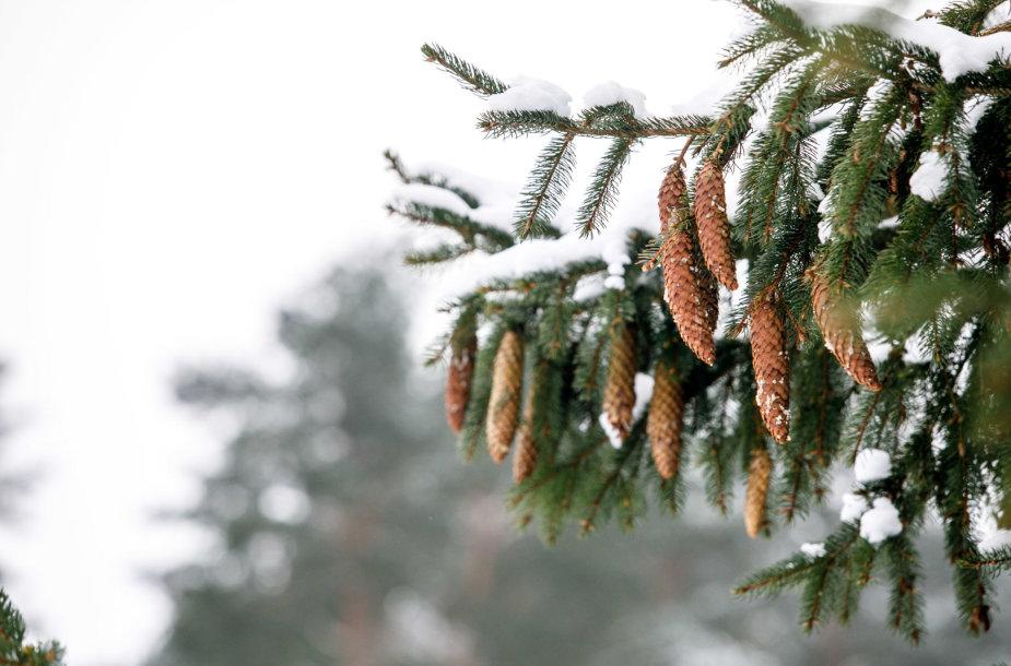 Škėvonių atodanga žiemą