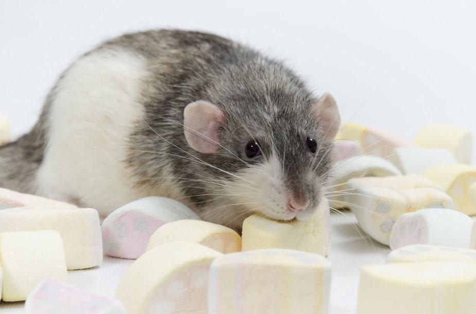 Pelė ir saldainiai